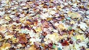 Fondo de las hojas de otoño hermosas almacen de video