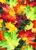 Fondo de las hojas de otoño pintadas con la acuarela Colores 9 del otoño ilustración del vector