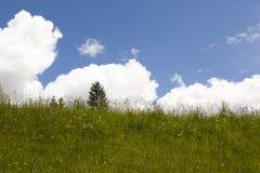 Fondo de las nubes y de los Wildflowers de la hierba verde Imagen de archivo libre de regalías