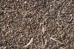Fondo de las nueces de Aussie Earth y de la goma fotografía de archivo libre de regalías