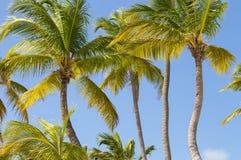 Fondo de las palmeras fotografía de archivo