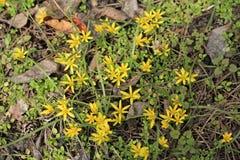 Fondo de las pequeñas flores y abeja amarillas Imagenes de archivo