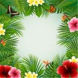 Fondo de las plantas tropicales Foto de archivo