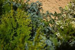 Fondo de las plantas verdes de la mezcla Fotos de archivo libres de regalías