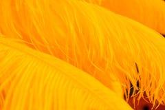 Fondo de las plumas anaranjadas del color Foto de archivo