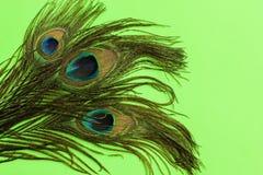 Fondo de las plumas del pavo real Fotos de archivo libres de regalías