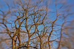 Fondo de las ramas de árbol desnudas borrosas contra el cielo azul foto de archivo libre de regalías