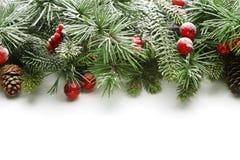 Fondo de las ramas de árbol de navidad Fotos de archivo