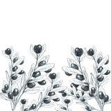 Fondo de las ramas de olivo blanco y negro stock de ilustración