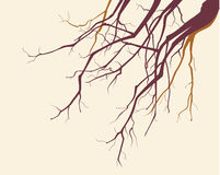 Fondo de las ramificaciones de árbol Imágenes de archivo libres de regalías