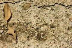 Fondo de las rocas y de la piedra de las hojas Imagenes de archivo
