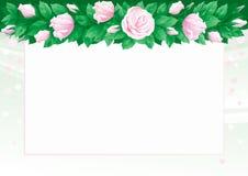 Fondo de las rosas Foto de archivo libre de regalías