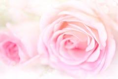 Fondo de las rosas de la flor con color rosado suave Fotos de archivo libres de regalías