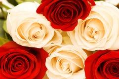 Fondo de las rosas rojas y blancas Imágenes de archivo libres de regalías