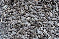Fondo de las semillas de girasol Cierre para arriba Foco selectivo fotografía de archivo