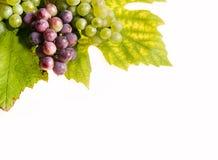 Fondo de las uvas foto de archivo