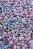 Fondo de las uvas de vino rojo fotografía de archivo libre de regalías