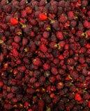 Fondo de las zarzamoras frescas deliciosas vistas desde arriba imagen de archivo libre de regalías