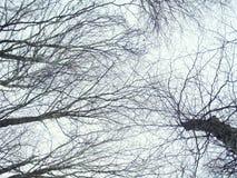 Fondo de los árboles Foto de archivo