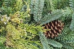 Fondo de los árboles de hoja perenne para la decoración Fotos de archivo libres de regalías