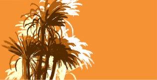 Fondo de los árboles de palmas Fotografía de archivo libre de regalías