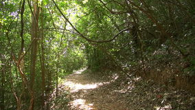 Fondo de los árboles forestales de maderas Paisaje verde de la naturaleza yermo metrajes