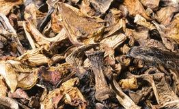 Fondo de los champiñones secados imagen de archivo libre de regalías