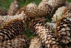 Fondo de los conos Imagen de archivo