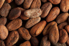 Fondo de los granos de cacao Imagen de archivo