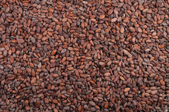 Fondo de los granos de cacao Fotografía de archivo
