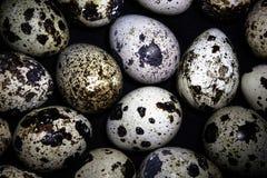 Fondo de los muchos huevos de codornices Fotos de archivo libres de regalías