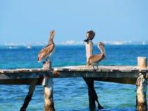 Fondo de los pájaros del mar azul fotos de archivo