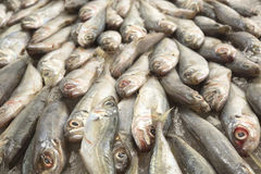 Fondo de los pescados del Scad Fotos de archivo libres de regalías