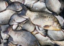 Fondo de los pescados frescos Imagen de archivo libre de regalías