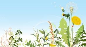 Fondo de los prados del resorte. ilustración del vector