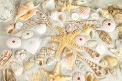 Fondo de los Seashells Fotografía de archivo