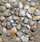 Fondo de los shelles del mar Fotos de archivo