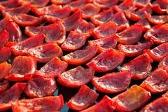 Fondo de los tomates rojos que se secan al aire libre en el sol Imágenes de archivo libres de regalías