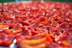 Fondo de los tomates rojos que se secan al aire libre en la luz del sol Imagen de archivo