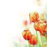 Fondo de los tulipanes stock de ilustración