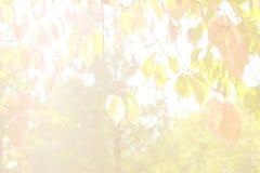 Fondo de luto brillante con las hojas de la cereza imagen de archivo libre de regalías