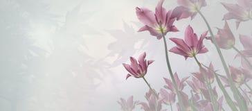 Fondo de luto - fondo de los tulipanes y de las hojas de arce imagen de archivo