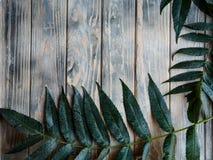 Fondo de madera áspero de la decoración verde natural de la hoja imagen de archivo