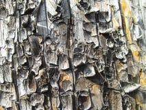 Fondo de madera Imagen de archivo