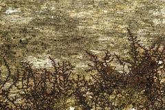 Fondo de madera con el liquen Imagen de archivo libre de regalías