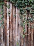 fondo de madera con la hoja Imagenes de archivo