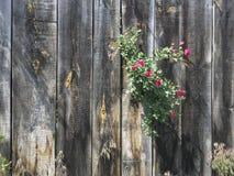 Fondo de madera con las pequeñas flores fotos de archivo libres de regalías