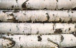 Fondo de madera de abedul Fotografía de archivo