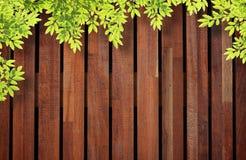 Fondo de madera de la pared con las hojas del árbol. Imágenes de archivo libres de regalías