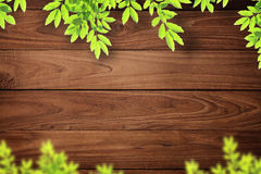Fondo de madera de la pared con las hojas del árbol. Foto de archivo libre de regalías